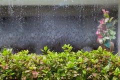 Zierpflanzen mit Vorhang von Wasser- und Blumenvasenunschärfe Hintergrund stockfotos