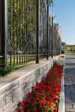 Zierpflanzen und Blumen Lizenzfreie Stockfotos