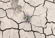 Zierpflanzenbau aus Sprüngen in der Erde heraus stockbilder