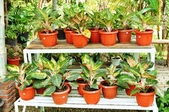 Zierpflanzesystem Stockfoto