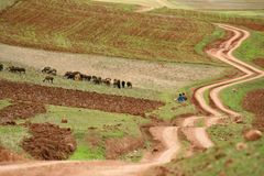 Zig zag road pass trough agriculture area of Inca people, Cusco, Peru royalty free stock photography