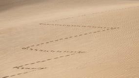 Zig zag shape footprints in a desert Royalty Free Stock Image