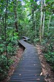 Zig-zag walkway in a forested area at Lower Peirce Royalty Free Stock Photos