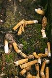 Zigarettenkippen aus den Grund mit Moos Lizenzfreie Stockfotos