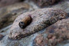 Zigarre Stockfoto
