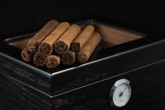 Zigarren über einem Luftfeuchtigkeitsregler Stockfotografie