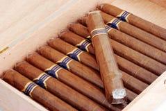 Zigarren in einem Luftfeuchtigkeitsregler Stockfotos