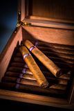 Zigarren im Luftfeuchtigkeitsregler Stockfotos