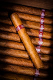 Zigarren im Luftfeuchtigkeitsregler Lizenzfreie Stockbilder