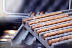 Zigarren im Reisefallluftfeuchtigkeitsregler-Prämienschutz stockfotografie