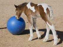Zigeunercolt mit blauem Ball Stockfotografie