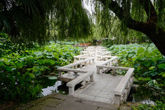 Zigzag bridge over lotus pond Stock Image