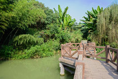 Zigzag footbridge in verdant plants on sunny day Royalty Free Stock Images