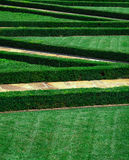 Zigzag landscaped lawn Stock Photo
