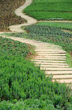 Zigzag Stone path. Stone path in the park Stock Images