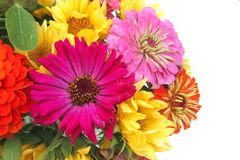 Ziinnia Bouquet Stock Photography