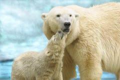 Zij-beer met een beerwelp Stock Fotografie