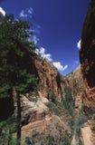Zij canion in Zion Nationaal Park, Utah Stock Fotografie