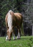 zijaanzicht die van een paard bij zijn middagpauze, in een landbouwbedrijf lopen Stock Foto