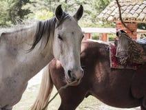 zijaanzicht die van een paard bij zijn middagpauze, in een landbouwbedrijf lopen Royalty-vrije Stock Foto