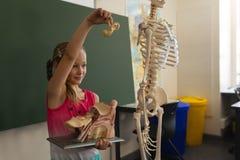 Zijaanzicht die van schoolmeisje anatomisch model in klaslokaal verklaren stock foto