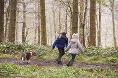 Zijaanzicht van broer en zuster het lopen huisdierenhond in een hout Stock Afbeelding