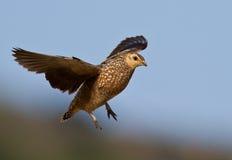 Vogel tijdens de vlucht stock foto