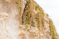 Zijaanzicht van de natuurlijke achtergrond van geel kalksteen met de hobbelige oppervlakte met donkere holten die door de overzee stock fotografie