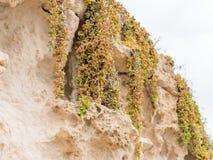 Zijaanzicht van de natuurlijke achtergrond van geel kalksteen met de hobbelige oppervlakte met donkere holten die door de overzee stock foto's