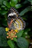 Zijaanzicht van een multi gekleurde vlinder stock afbeeldingen