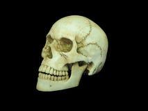 Zijaanzicht van menselijke schedel op geïsoleerde zwarte achtergrond Stock Fotografie