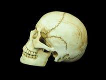 Zijaanzicht van menselijke schedel op geïsoleerde zwarte achtergrond Royalty-vrije Stock Foto's