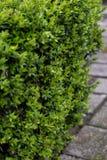 Zijaanzichtclose-up van struik op sidewalke stock foto