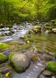 Zijdeachtige stroom dichtbij Road Greenbrier in de Rokerige Bergen Stock Afbeeldingen