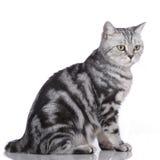 Zijdelings geïsoleerde kat Stock Afbeeldingen
