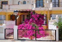Zijn de prachtig bloeiende Bougainvillea roze flovers in de ingang aan het huisbinnenland spanje Stock Foto