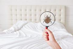 Zijn vuil daar! Lens met insect tegen bed Insanitation in slaapkamer Teken van smerigheid De insecten zijn overal Ongewassen bedc royalty-vrije stock afbeelding
