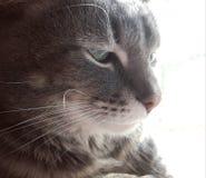 Zijprofiel van een kat Stock Foto