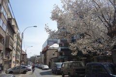 Zijstraat met flats, huizen en bureaugebouwen in Boekarest Royalty-vrije Stock Afbeeldingen