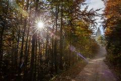 Zijweg in Slovenië Royalty-vrije Stock Foto