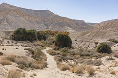 Zik Spring in the Zin Valley in the Negev royalty free stock photos