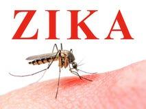 Zika病毒蚊子 图库摄影