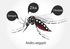 Zika d'aedes Images libres de droits