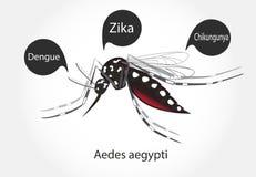 Zika dell'Aedes illustrazione vettoriale