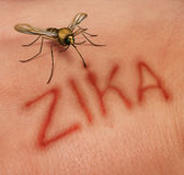 Zika Disease Concept. As a virus risk symbol with a dangerous illness carrying mosquito forming text on human skin that represents the danger of transmitting royalty free illustration