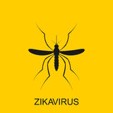 Zika mosquito vector. Virus alert. Aedes Aegypti  on white background Stock Images