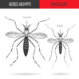 Zika virus graphic design elements. Zika alert banner, poster or flyer with male and female aegypti aedes mosquitoes. High quality graphic design elements,  on Royalty Free Stock Photography