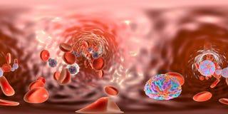 Zika-Virus im Blut, kugelförmige Panoramaansicht Stockbilder