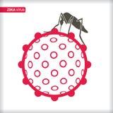 Zika Virus with mosquitoe. Stock Images