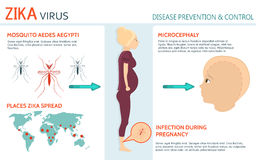 Zika Virus and pregnancy Royalty Free Stock Photography